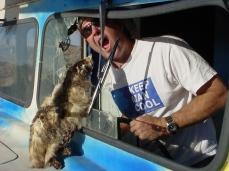 Ned Badger Attack