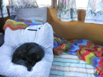 Cat, Day Bed