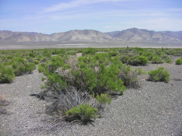 Sagebrush Desert