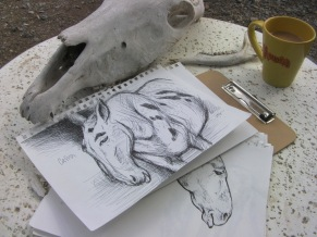 mule and skull