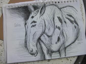 mule head