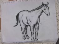 horse from side